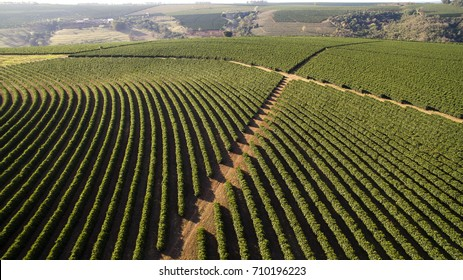 Aerial view coffee plantation in Altinopolis city - Brazil