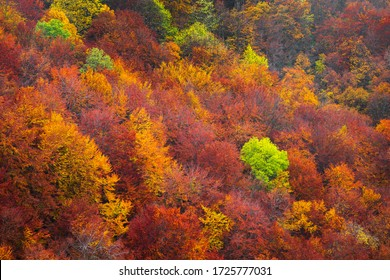 Aerial view of a colorful deciduous forest in autumn with multicolored yellow, orange and green foliage on the trees in a scenic full frame view of the changing seasons