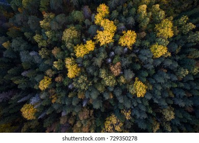 Aerial view of colorful fall foliage of boreal forest in nordic country