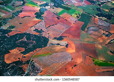 Aerial view of colorful fields with olive trees of Andalusia, Spain