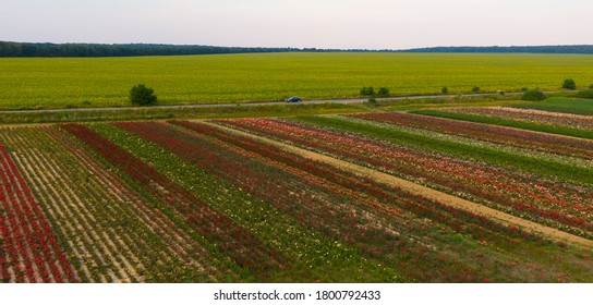 Aerial view of the colorful flower garden And the road that passes through the flower fields and field of sunflowers. Ukraine