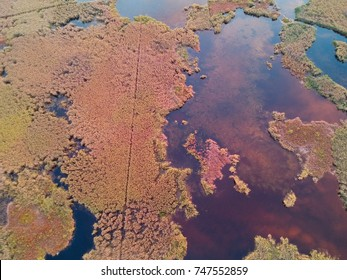 Aerial view of Colorful Reed on the lake