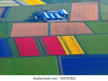 "Aerial view of colorful Tulip fields in Holland. From above, the individual flowers dissolve into beautifully flat fields of color. The entire country turns into a bright ""tapestry"" full of colors."