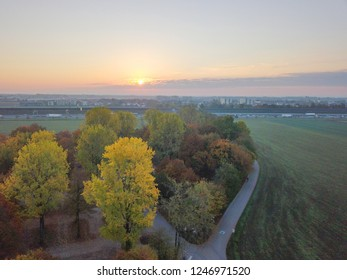 Aerial view of colourful autumn trees on field in sunrise