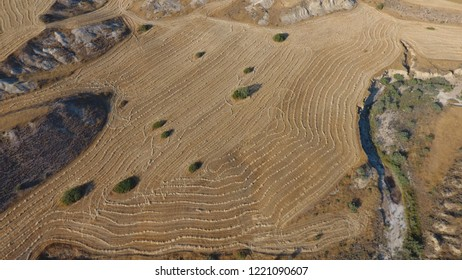 Aerial view of combine harvester agricultural machinery harvesting wheat crops in cultivated field in Northern Cyprus. Barley Harvest. Arpa Hasadı. Truck
