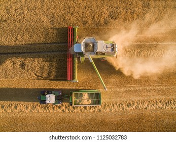 Aerial view of combine harvester and a tractor with trailer harvesting golden ripe wheat field in the summer - Agriculture. From above. Top view