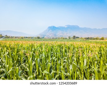 Aerial view of corn field and Common Tobacco plantation in Phetchabun province, Thailand