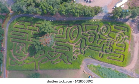 Aerial view of a Corn maze from above directly over.