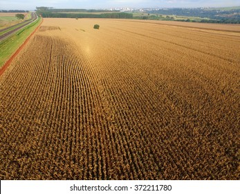 Aerial view of a cornfield in the countryside. Brazil.