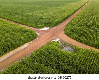 Aerial view of Cornfield and dirt roads in clear summer day. Agriculture, harvest and farm concept. Genetically modified and transgenic corn for export, produced in Mato Grosso, Brazil.