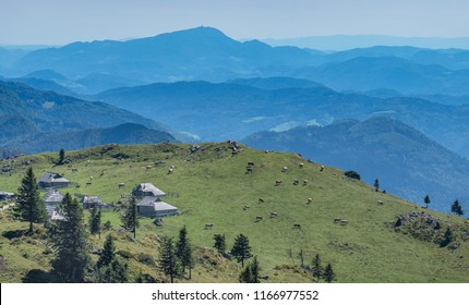 Aerial view of cottages and cows grazing  on the edge of Velika planina (Big Pasture Plateau), Kamnik, Slovenia