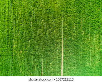 Aerial view of a cultivated field in Italy