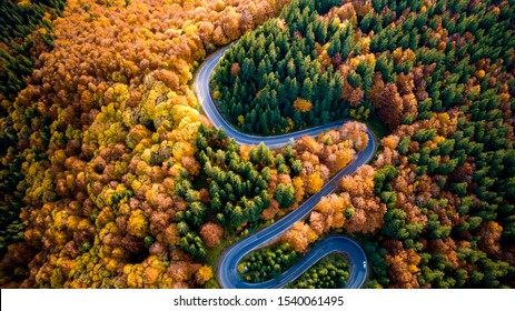 Aerial view of curvy road in beautiful autumn forest at sunset. Top view of roadway with autumn colors. Europe roads and transportation concept