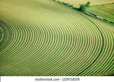 An aerial view of cut hay, wind rowed for drying, in an alfalfa field in the fertile farm fields of Idaho.