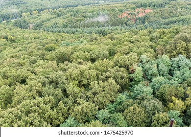 Aerial view of deciduous woods at summertime on a cloudy day .