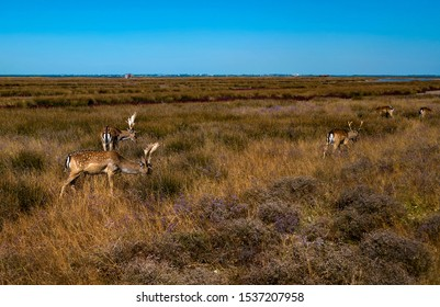aerial view of deers in the autumn steppe, sika deers in the autumn steppe, Herd of deer in autumn steppe aerial, aerial view of deers in the wild