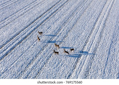 aerial view of deers running on the field