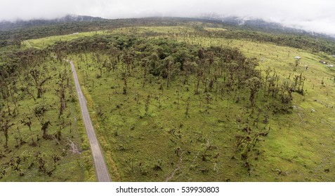 Aerial view of deforestation along a road cut through montane rainforest on the Amazonian slopes of the Andes in Ecuador. The forest is being cleared for cattle farming.
