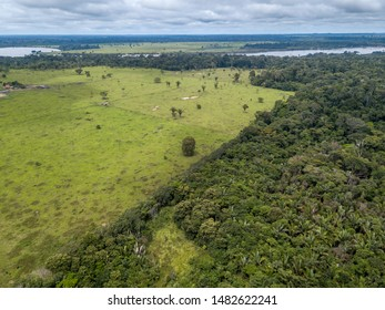 Aerial view of deforestation and destruction of native Amazon rainforest to open cattle pasture area near Jamari National Forest in Rondonia state, Brazil.