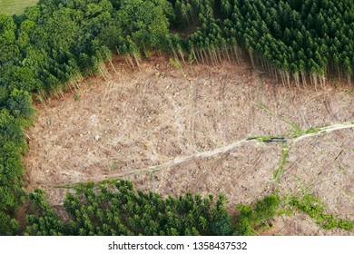 Aerial View of Deforestation (Forest Destruction), Aerial Photography / Shot / Drone View of Rainforest Cleared for Agriculture Development
