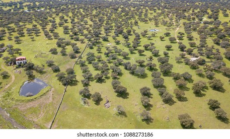 Aerial view of the dehesa in the province of Caceres in Extremadura Spain