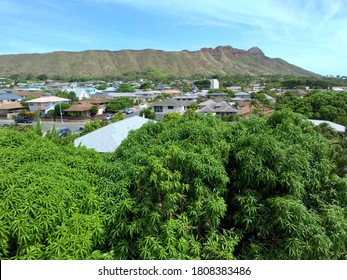 Aerial view of Diamondhead,  Mango Trees, Kapahulu Homes, and Pacific ocean on Oahu, Hawaii.  August 2019.