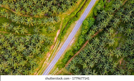 Aerial view, directly above a small road through a palm oil plantation in Malaysia. Kilometers of monoculture landscape near Port Dickson, the coast of Malaysia on the strait of Malacca