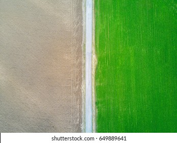 Aerial view of dirt road that divides cereal fields from virgin field.