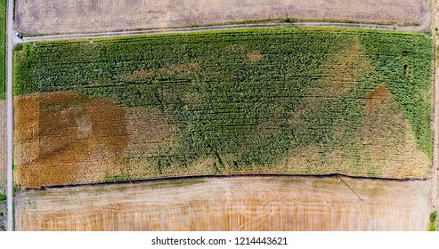 aerial view drone agriculture