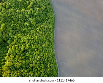 Aerial view from the drone, a bird's eye view to the forest with green spaces and agricultural field with the road dividing them in half at sunset in the summer evening,