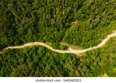 Aerial view from drone to dirt road through forest