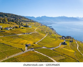 Aerial view with drone over vineyards in golden autumn color, Lake Leman and Alps Mountain. Region Lavaux, which is a Unesco heritage in Switzerland