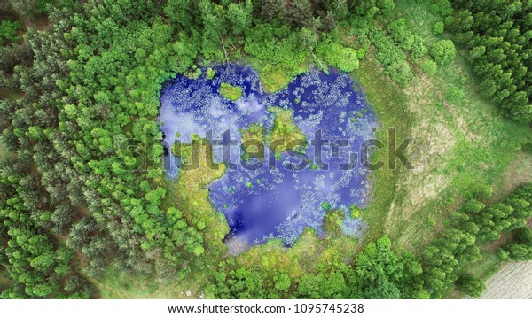 Aerial view from drone- pond in the forest in heart shape