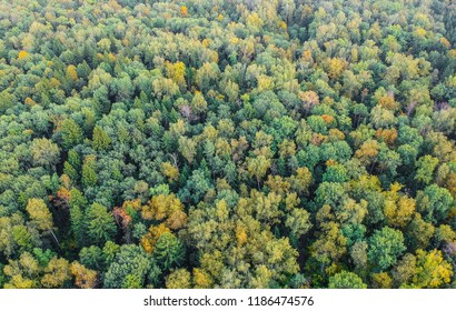 Aerial view of early autumn forest
