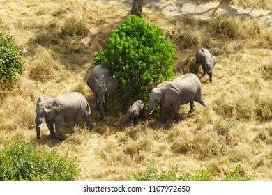 Aerial view of an elephant family.