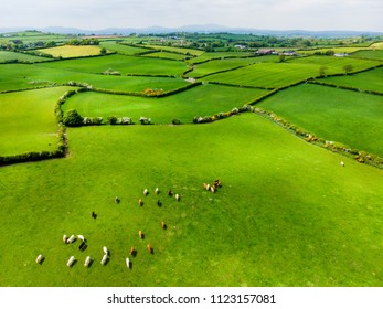 Aerial view of endless lush pastures and farmlands of Ireland. Beautiful Irish countryside with emerald green fields and meadows. Rural landscape.