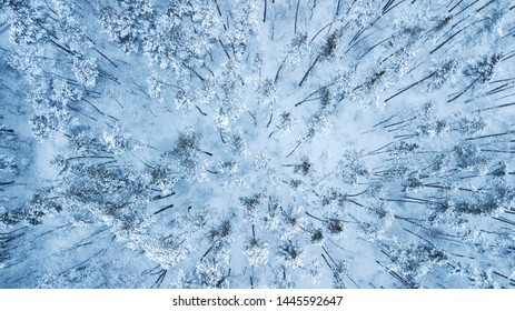 Aerial view of evergreen Christmass pine forest from above. bird's eye, drone shot. amazing natural winter background