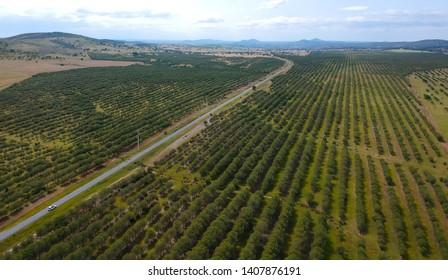 Aerial view of a farm field with a road. Alentejo Portugal