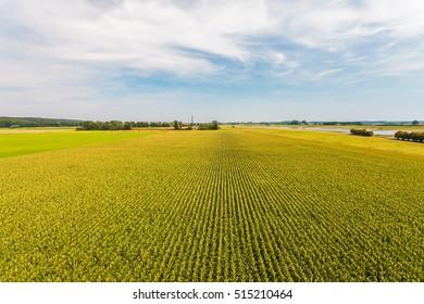 Vista aérea de un campo de cultivo con hileras de plantas de maíz en la provincia holandesa de Gelderland