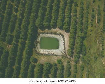 Aerial view of a farm field with a water tank. Alentejo Portugal