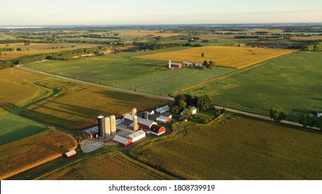 Aerial view of farm, red barns, corn field in September. Harvest season. Rural landscape, american countryside. Sunny morning