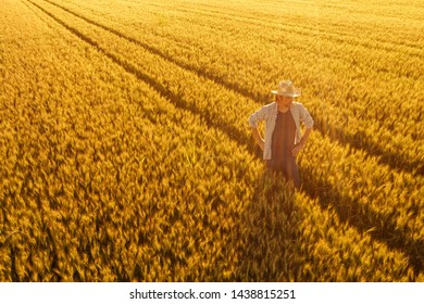 Aerial view of farmer standing in golden ripe wheat field and observing crops. Image is taken from drone pov high angle view in wide cultivated cereal field.