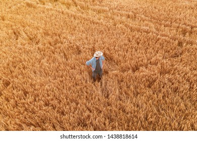 Aerial view of farmer standing in ripe barley crop field. Adult male agronomist examining plantation ready for harvesting season from drone point of view