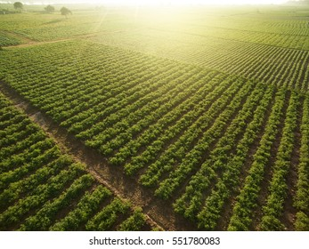 Image result for fields aerial view