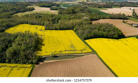 Aerial view of fields of colza, France, Europe