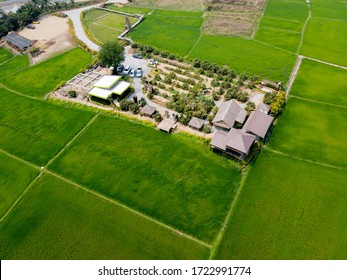 Aerial view from flying drone of Field rice with landscape green pattern nature background, top view field rice, with Coffee Shop
