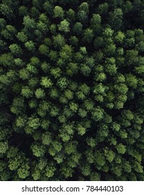 Aerial view of a forest. Beautiful christmas tree, pine tree view from a drone. Forest in Australia.