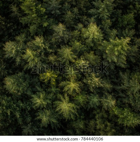 Aerial View Forest Beautiful Christmas Tree Stock Photo Edit Now