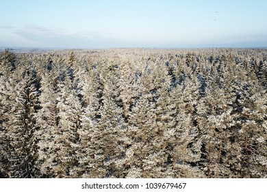 Aerial view of forest covered with snow