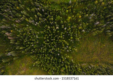 Aerial view of forest destruction and deforestation. Environmental problem of the whole world